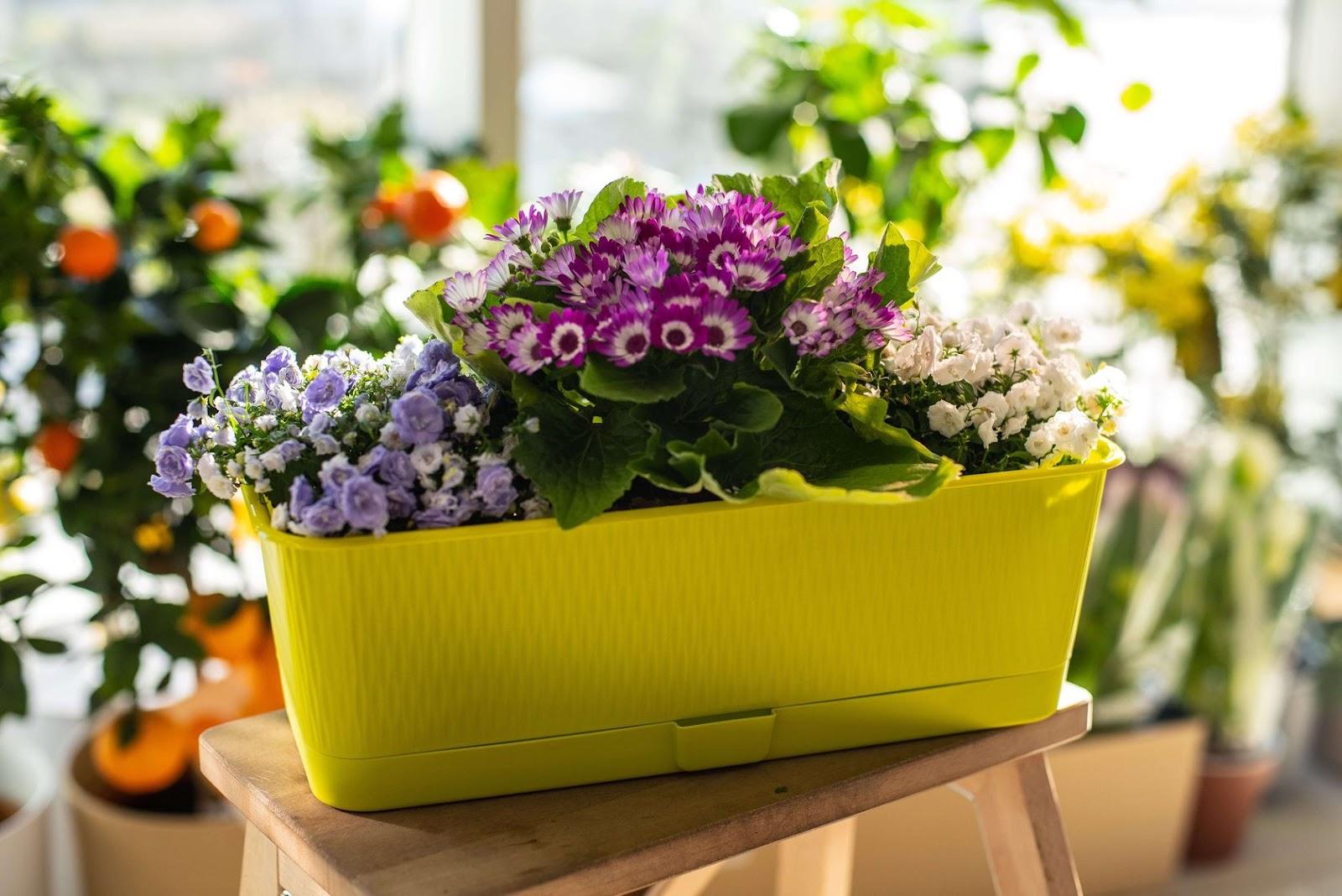 Емкость для пересадки растений фото - вазон