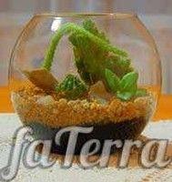 Флораріум з сукулентів фото - тераріум з кактусів