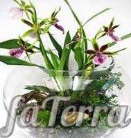 Міні флораріум фото - Квіти в акваріумі