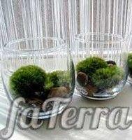 Тераріум фото - флораріум в круглому акваріумі
