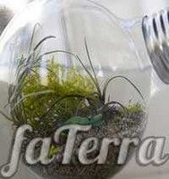 Тераріум з лампочки фото - Флораріум в лампочці